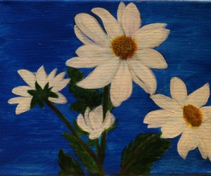 White Daisies as a bunch